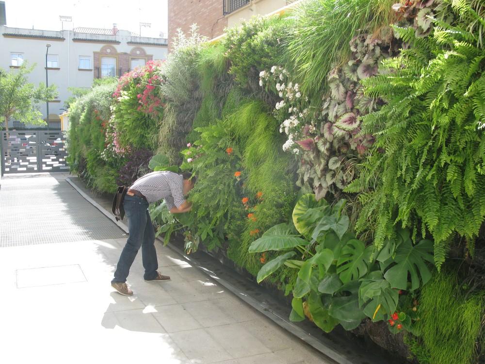 Florvisi n los jardines verticales - Jardines verticales sevilla ...