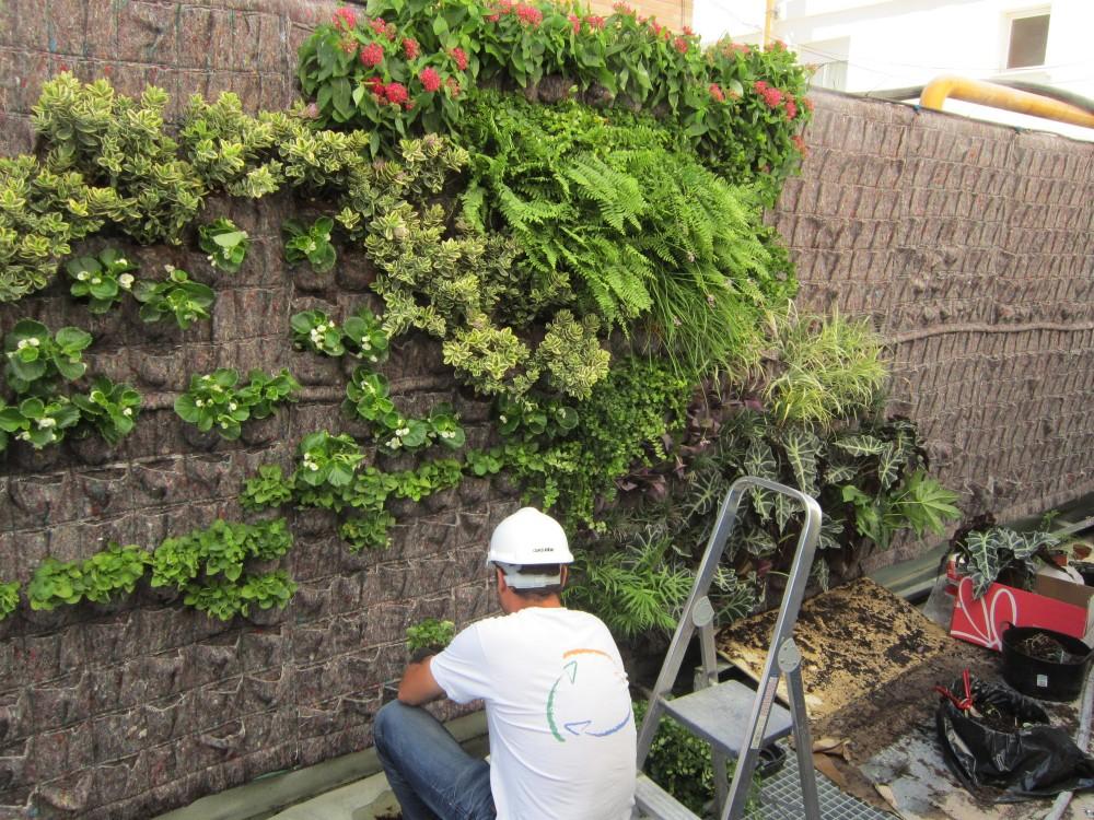 Florvisi n los jardines verticales for Imagenes de jardines verticales